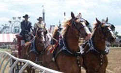 LaPorte County Draft Horse Owners Club