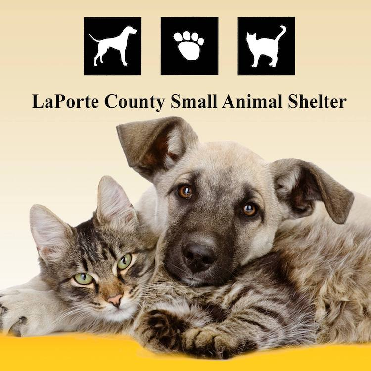 Laporte county small animal shelter visit michigan city for Laporte county