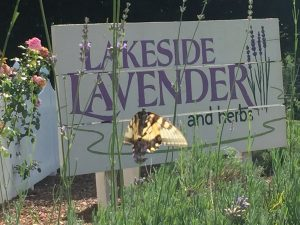 Lakeside Lavender and Herbs Annual Lavender Festival @ Lakeside Lavender and Herbs | La Porte | Indiana | United States